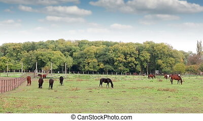 herd of  horses on pasture rural landscape