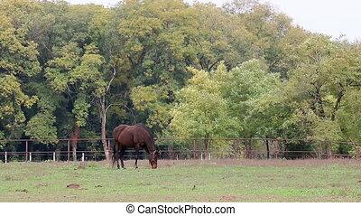 horse on pasture autumn season