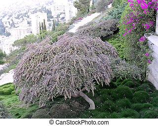 Haifa Bahai Gardens green corner - Green corne in Bahai...