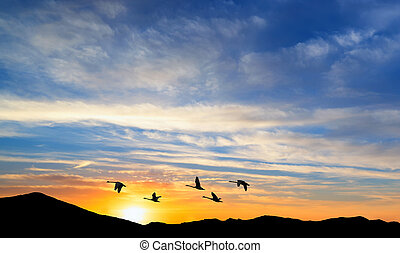 Migrating birds over the mountains - Several birds flying...