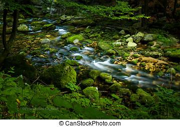 Forest stream running over mossy rocks.
