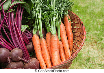 Root Vegetables - Farm Fresh Carrots and Beets.