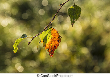Multicolored leaves of a tree in indian summer