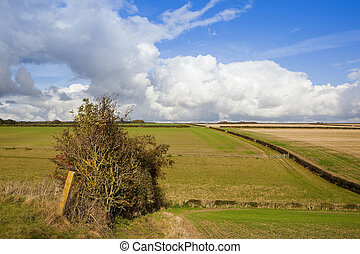 old hedgerow and pasture - an old hedgerow near a young...