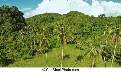 Rainforest and jungle. Palm trees. Philippines. - Rainforest...