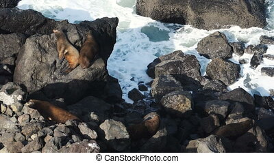Seal Rock Pacific Ocean Oregon Coast Surf Tide Wildlife -...
