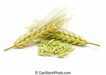 ears of corn - ear of barley on white background