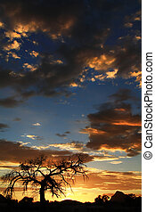 Arizona Sunset - Lonely Mesquite on an Arizona evening