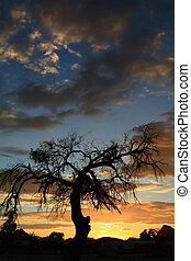 Mesquite Sunset - Lonely Mesquite on an Arizona evening