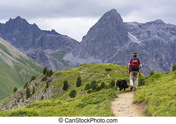 Herdsman with sheepdog in Alps mountains, Livigno, Italy