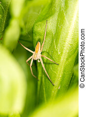Spider on a green leaf. close-up