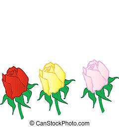 Vector illustration red ,yellow,pink roses on a white...