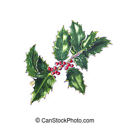 Christmas holly on white. Hand drawn sketch