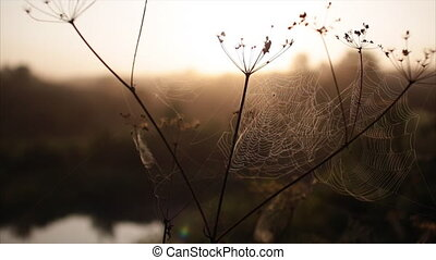 spider's web morning dawn river