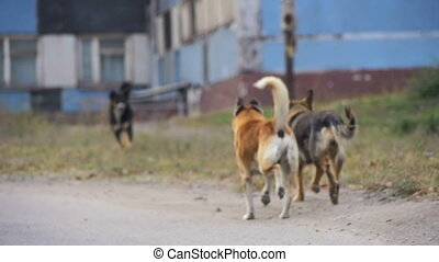 Homeless Dogs on the Street. Slow Motion