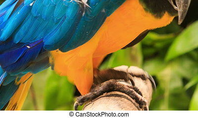 Closeup Parrot Takes Seat on Wooden Stick in Park Show -...