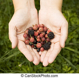 hands holding different berries