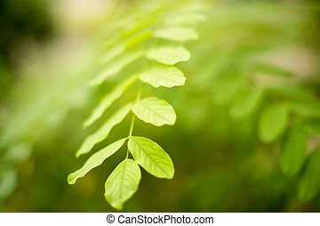 green leaves on the branches of a tree