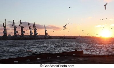 Cargo cranes in the port - Cargo cranes in the sea port at...