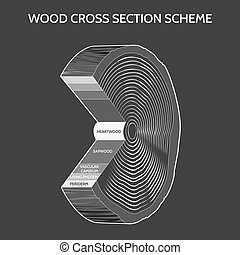 Wood cross section scheme on grey background. Vector...