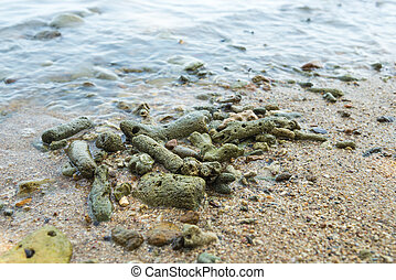 Coral Rubble formed from old dead corals that is washed up onto the beach