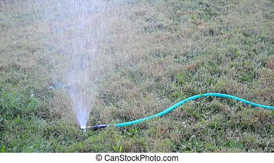 Hose Sprinkler - A sprinkler attached to a hose watering the...