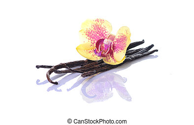 Vanilla Bean and Flower isolated on white background