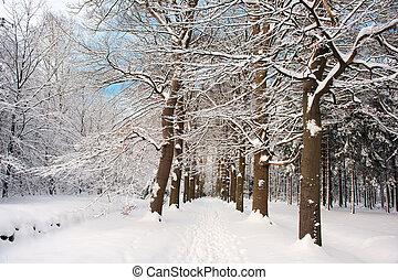Snow in the forest