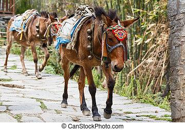 Himalayan horse caravan - Photo of himalayan horse caravan...