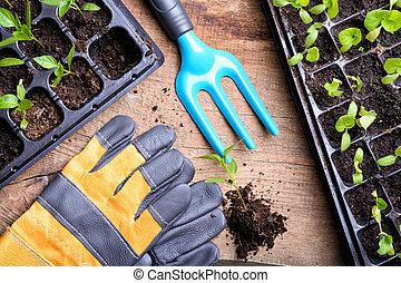 Garden tools & seedling background .