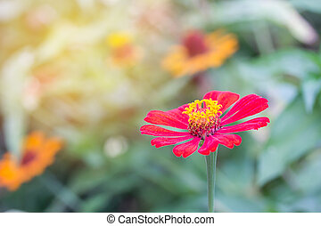 beautiful red flower with sunlight