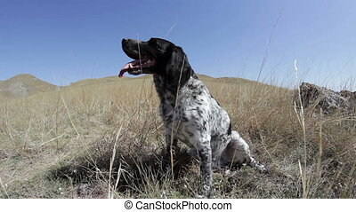 dog sits on the edge of the hill and fast breath - The dog...