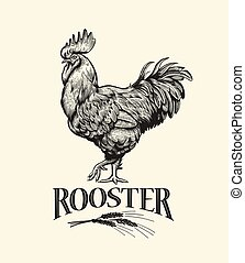 Rooster Illustration in Vintage engraving style. - Rooster....
