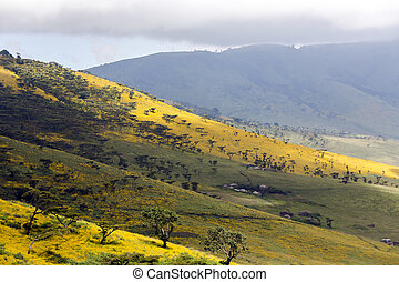 Flowering valley Ngorongoro Crater Conservation Area,...