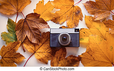camera with autumn maple leaves