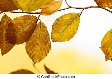 Colorful leaf in park. - Autumn season concept. Colorful...