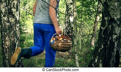 Man pick mushroom and put it in basket near birch tree trunk