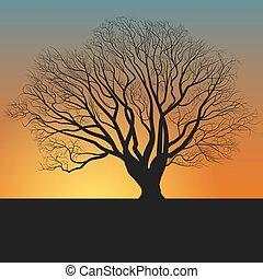 tree silhouette and nightfall - tree, silhouette,...