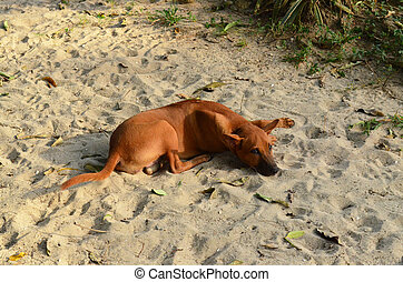 Lie down dog - Brown lie down dog at the beach