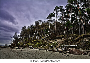 Baltic coast after storm - Baltic coast with eroded beach...