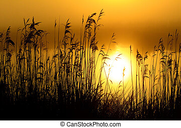 Sunrise with morning dew at a lake - Colourful sunrise with...