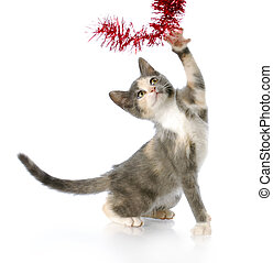 playful christmas kitten - adorable eight week old kitten...