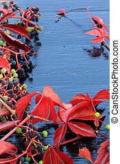 Autumn background wild vines climbing ivy black wooden