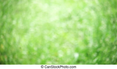 abstract background of sunlit green grass - Defocused...