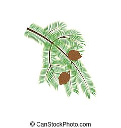 Pine branch illustration on the white background. Vector...