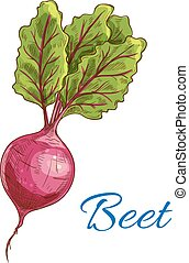 Beet icon. Fresh farm vegetable tuber with leaves - Beet....
