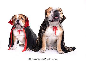English bulldogs as vampires - Couple of English bulldogs as...