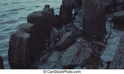 Wooden logs sticking out of water by waters edge near the...