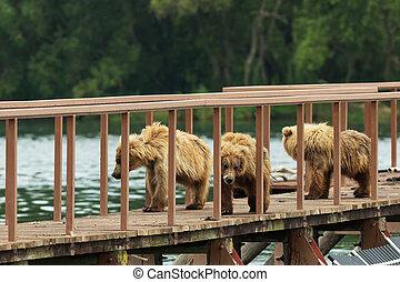 tres, poco, marrón, oso, cachorro, en, cerca, a, Cuenta,...