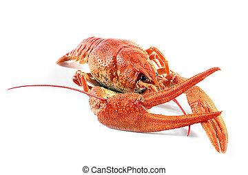 fresh boiled crawfish - large fresh boiled crawfish...